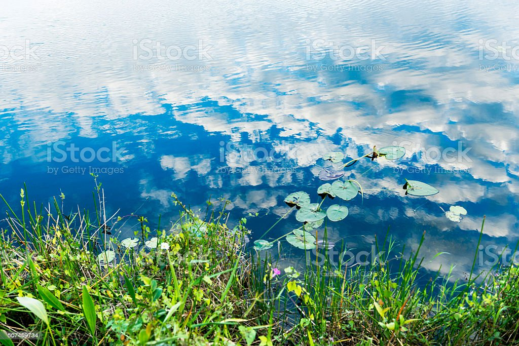Everglades Lilly Pads Floating on Clouds and Blue Sky Reflections stock photo