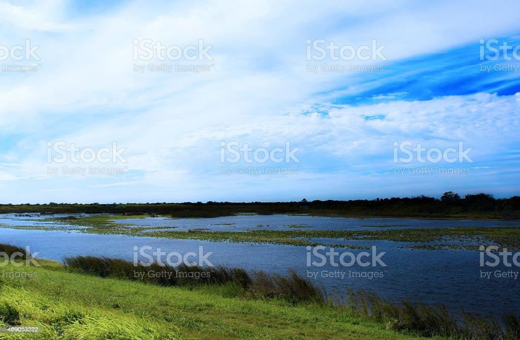 Everglades Marshlands stock photo
