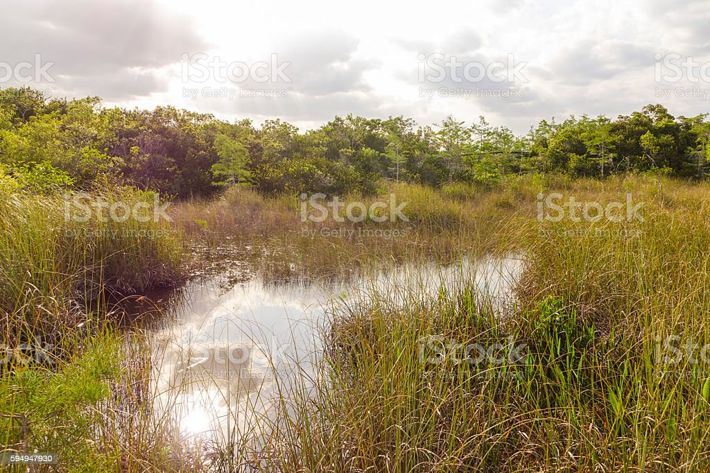 Everglades Nationalpark in Florida Lizenzfreies stock-foto