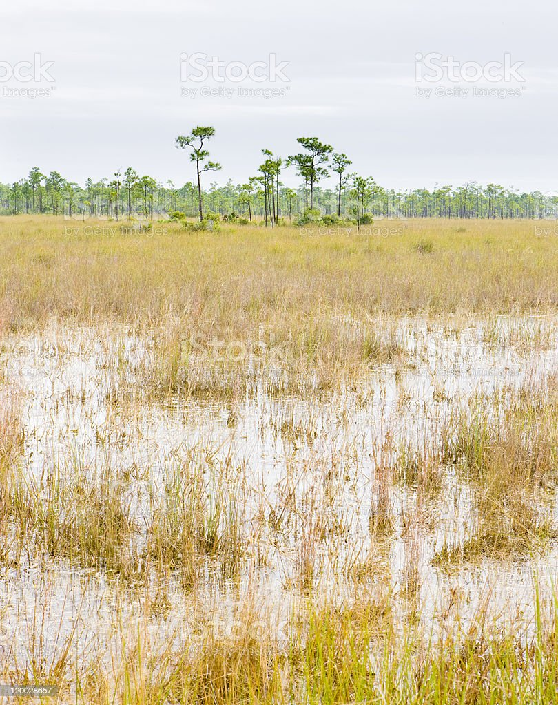 Everglades National Park stock photo