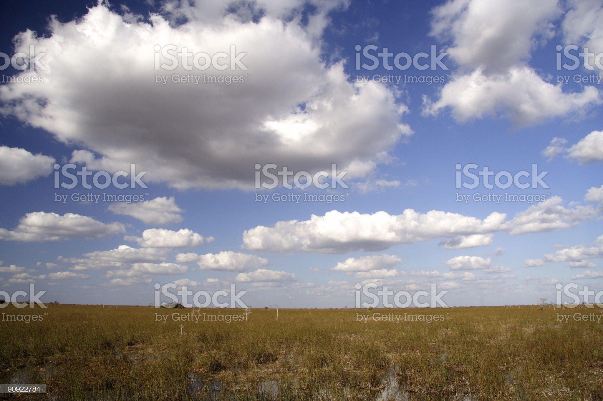 Everglades Panorama royalty-free stock photo