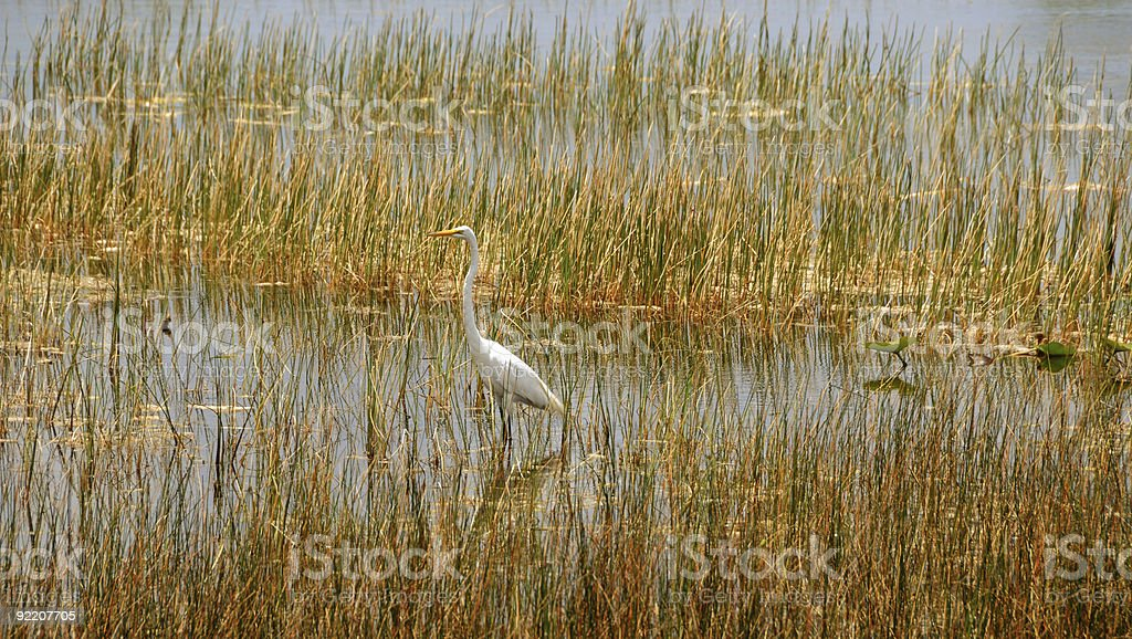 Everglades scenery royalty-free stock photo