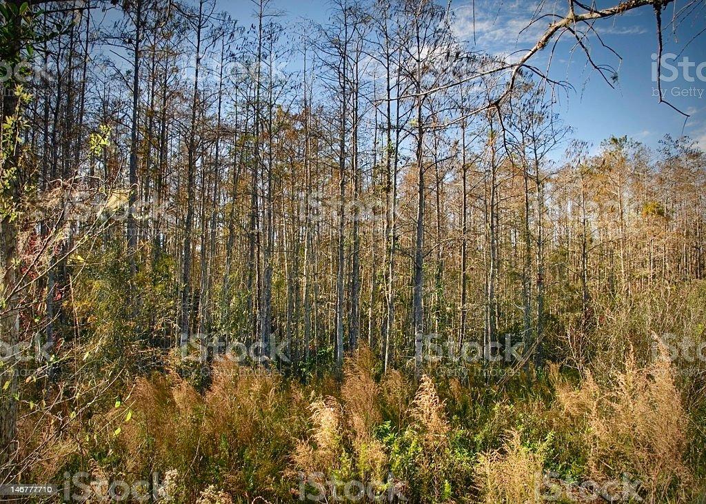 Everglades Swamp stock photo