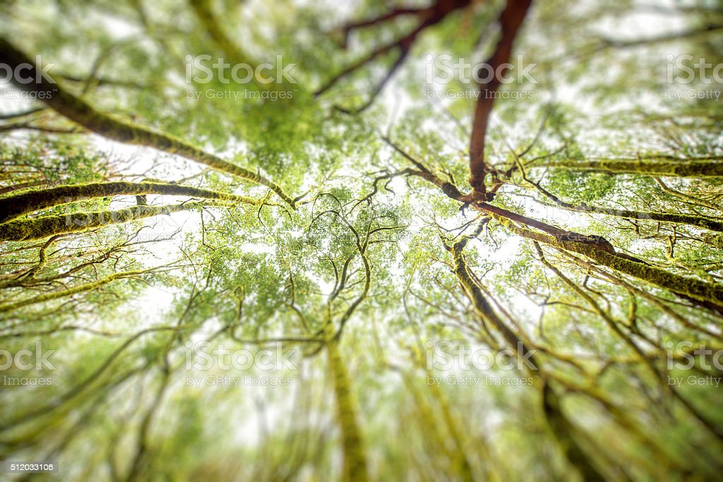 Evergreen forest on La Gomera island stock photo