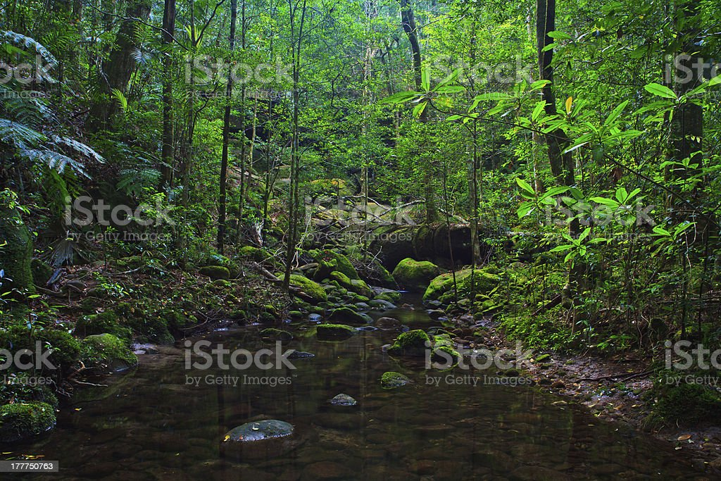 Evergreen forest royalty-free stock photo