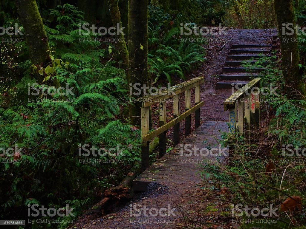 Evergreen Forest stock photo