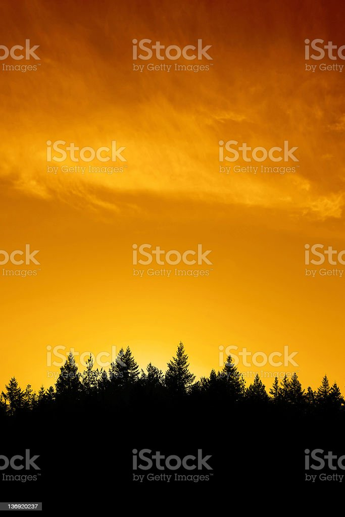 XXL evergreen forest sunset royalty-free stock photo