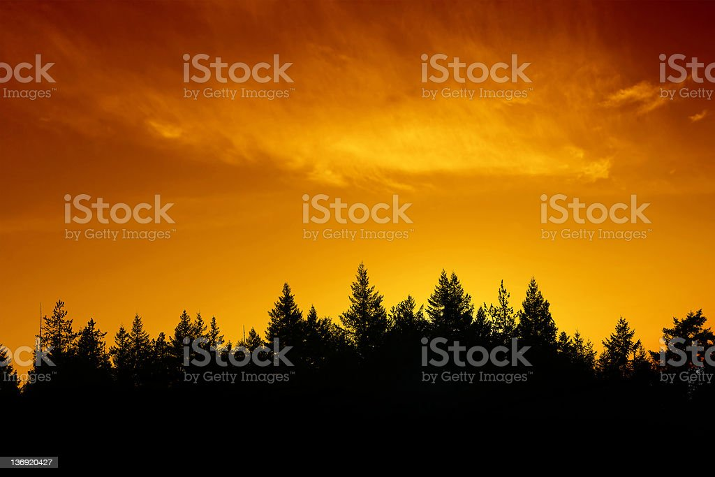 XXL evergreen forest sunset stock photo