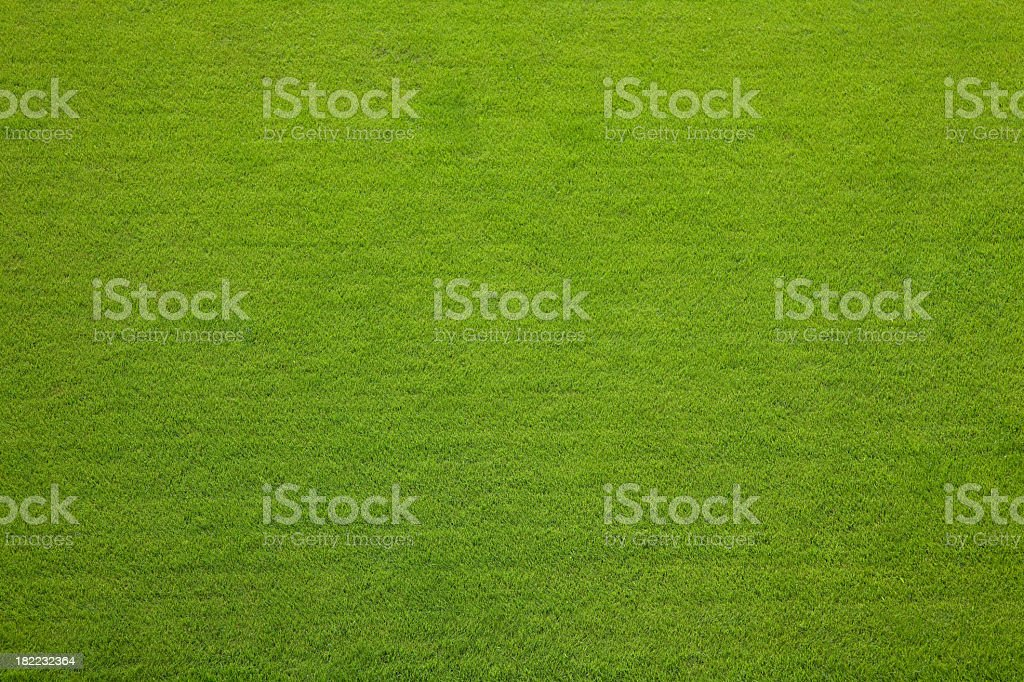 Evergreen grass texture background stock photo