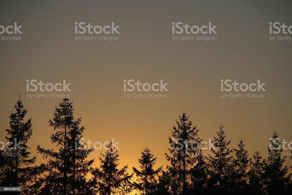Evergreen silhouettes in a sunset royalty-free stock photo
