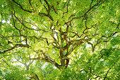 Evergreen trees.