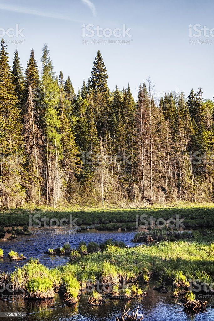 Evergreen Wilderness Stream in Northern New York State stock photo