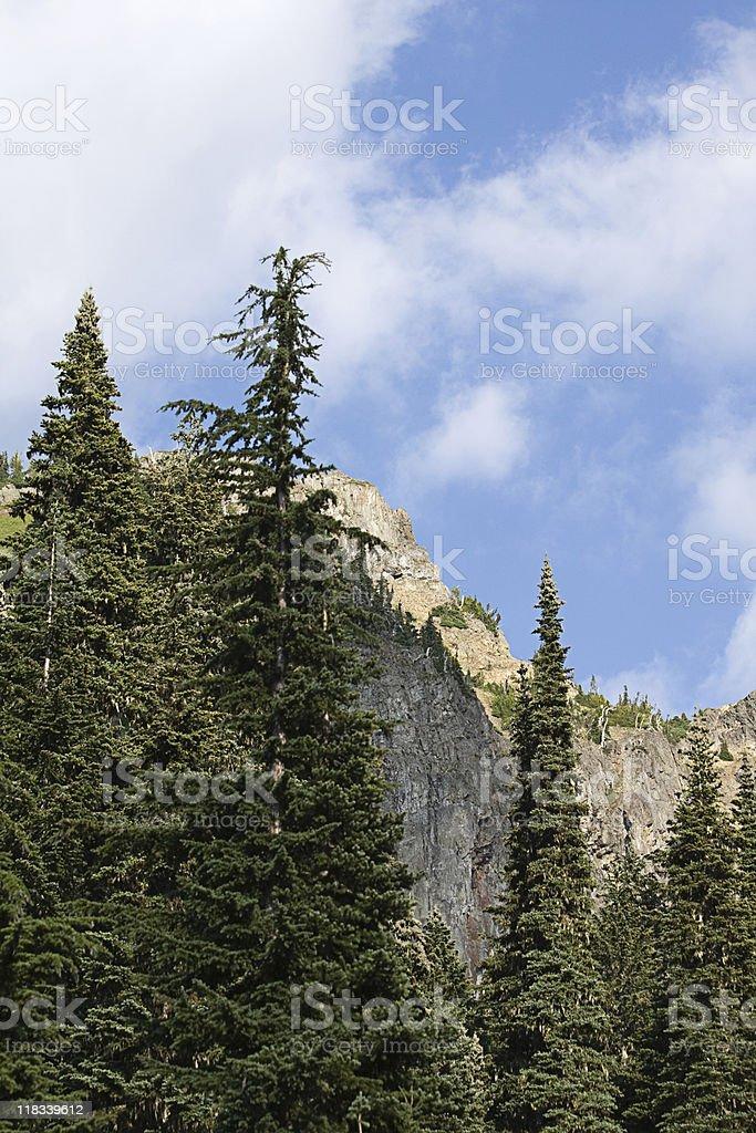 Evergreens on a mountain ridge stock photo