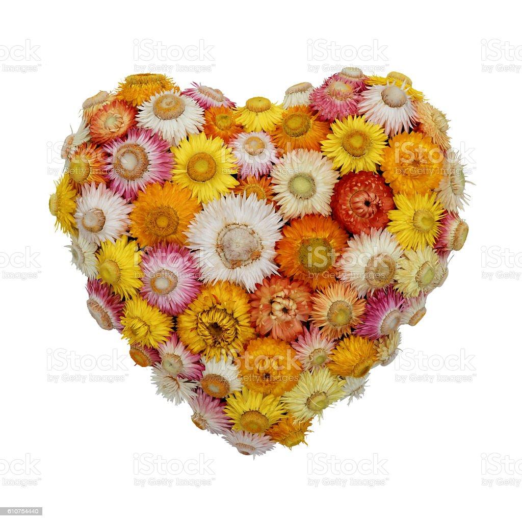 Everlasting Flower Heart – Foto