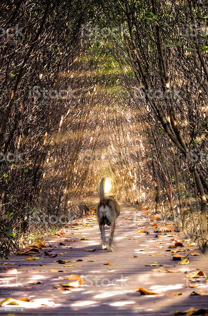 Every dog goes to heaven. stock photo