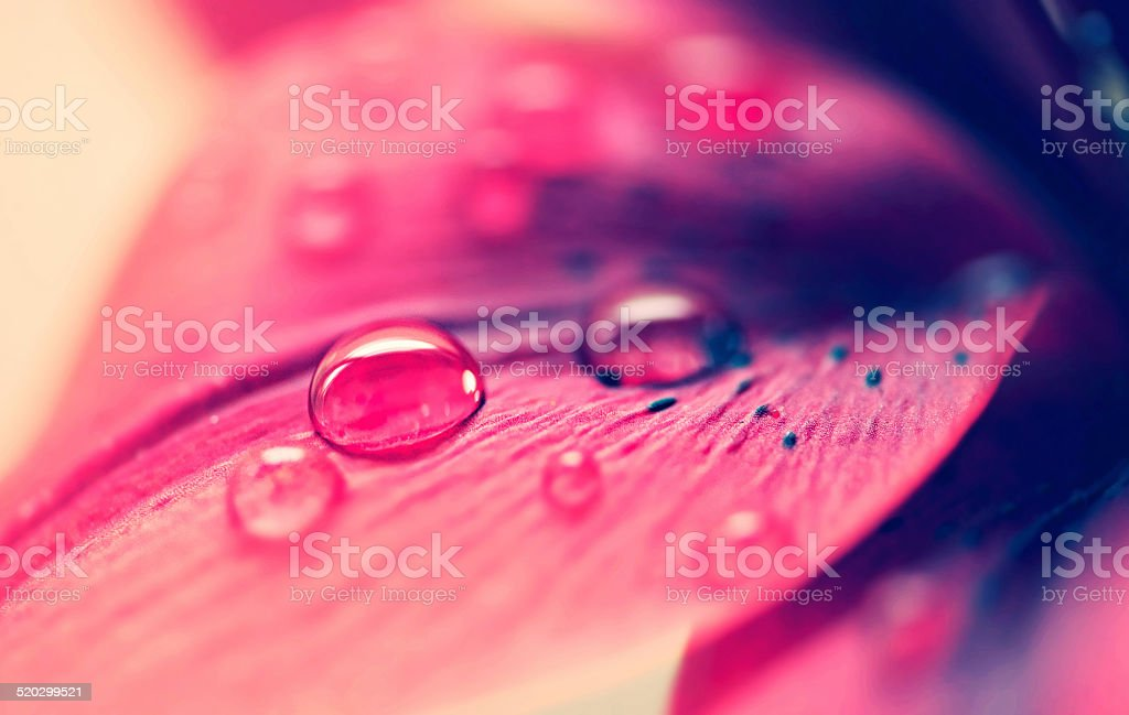 Every living thing needs water stock photo