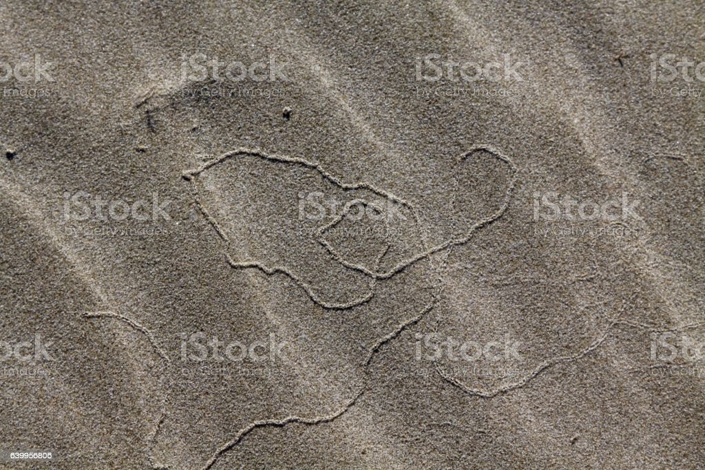 Evidence Of A Snail Like Animal Under The Sand stock photo