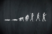 evolution of human