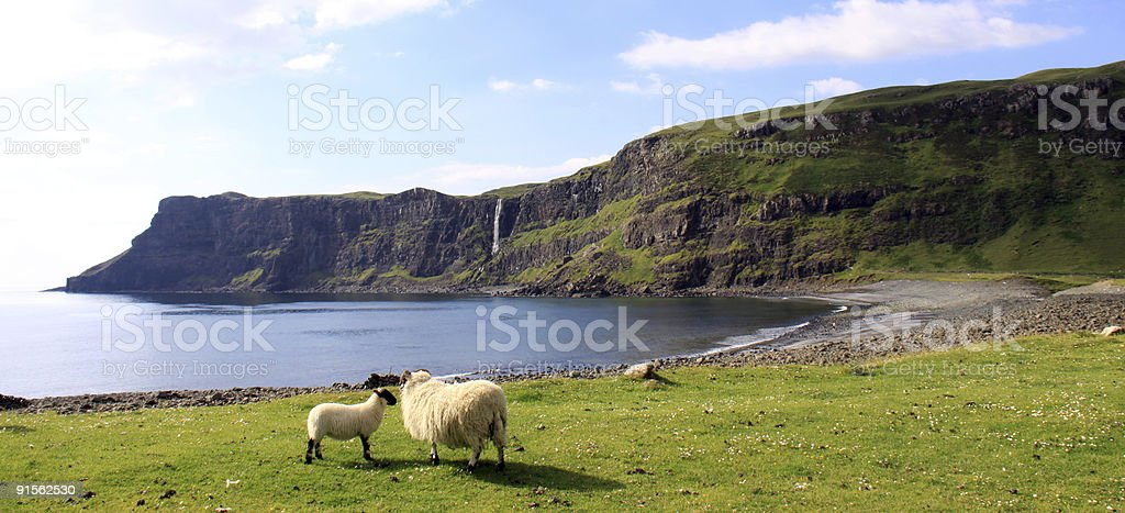 Ewe with her lamb near a beach in Skye, Scotland royalty-free stock photo