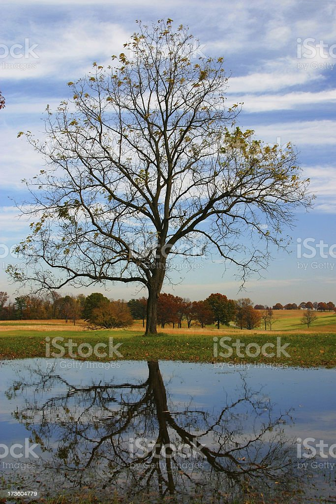 Exagerated Sense of Fall royalty-free stock photo