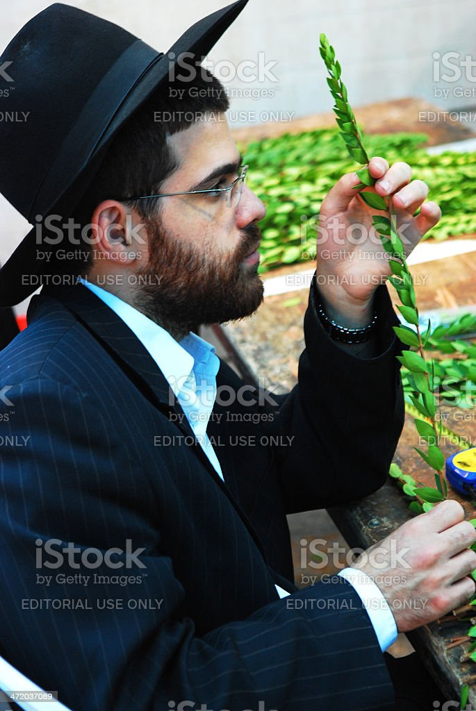 Examining a leafy branch of Aravah. stock photo