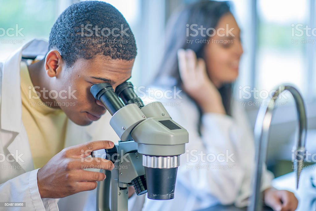 Examining the Slides in the Miscroscope stock photo