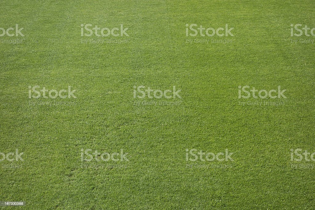 Excellent grass royalty-free stock photo