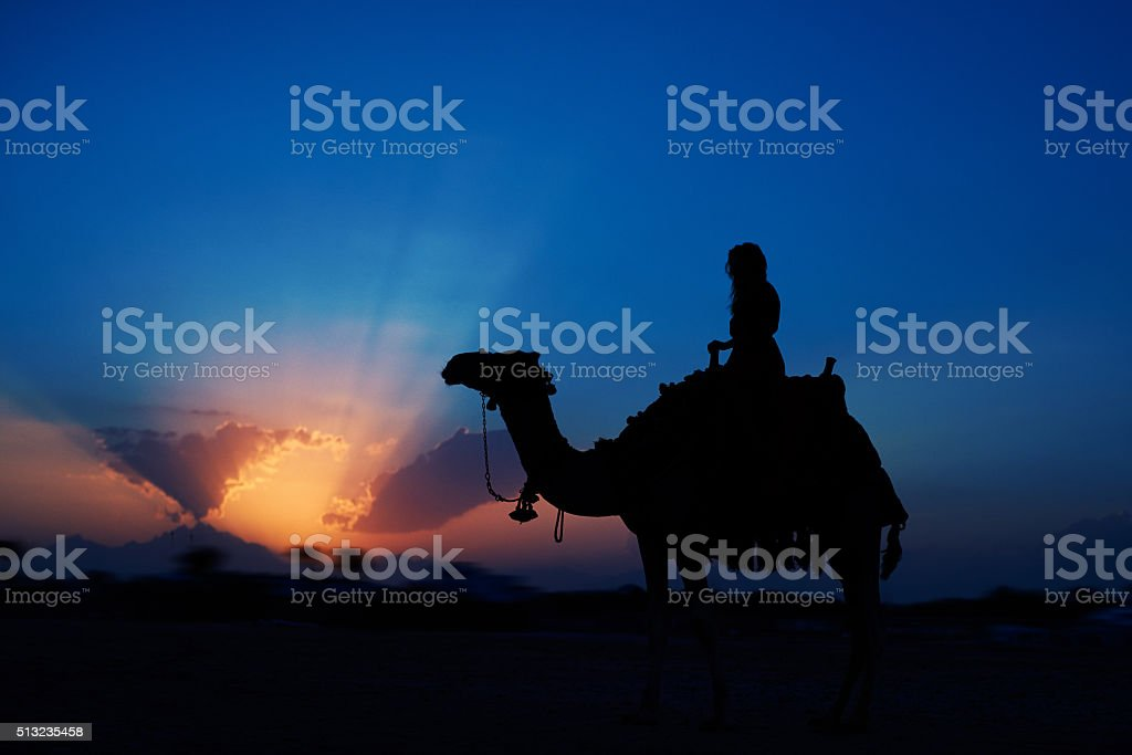 exciting sunset riding a camel stock photo