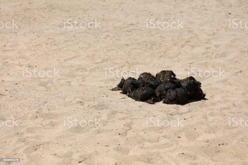 Excrements of an Indian Rhinoceros (Rhinoceros unicornis) stock photo