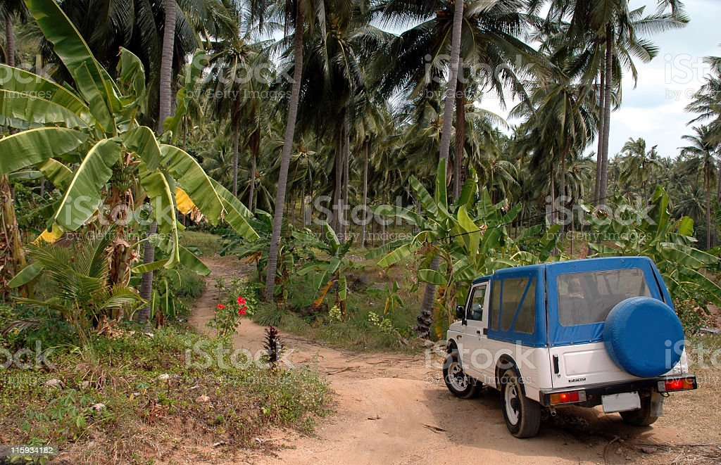 Excursion through tropical forest in Koh Samui,Thailand stock photo