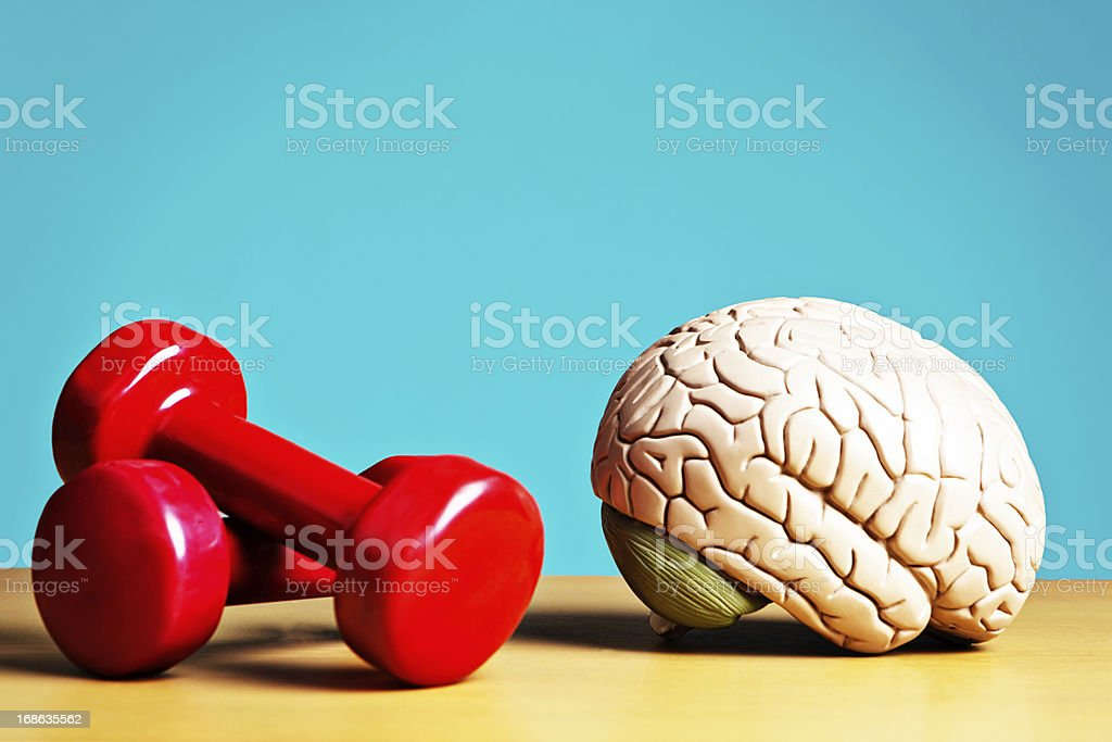 Exercise keeps body and mind fit: model brain with barbells stock photo