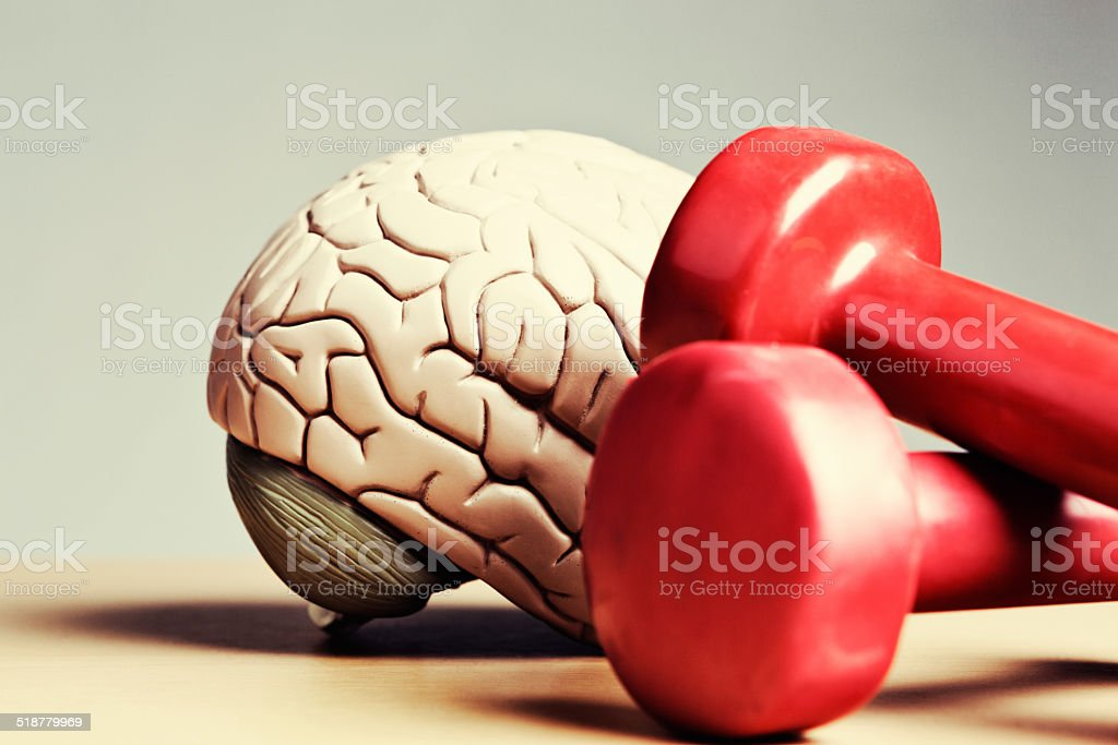 Exercise your mental powers: model brain with gym weights stock photo