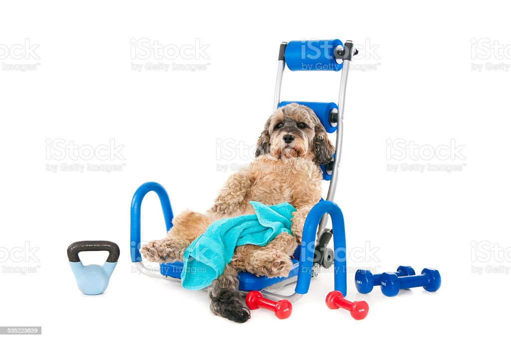 Exhausted dog after workout stock photo