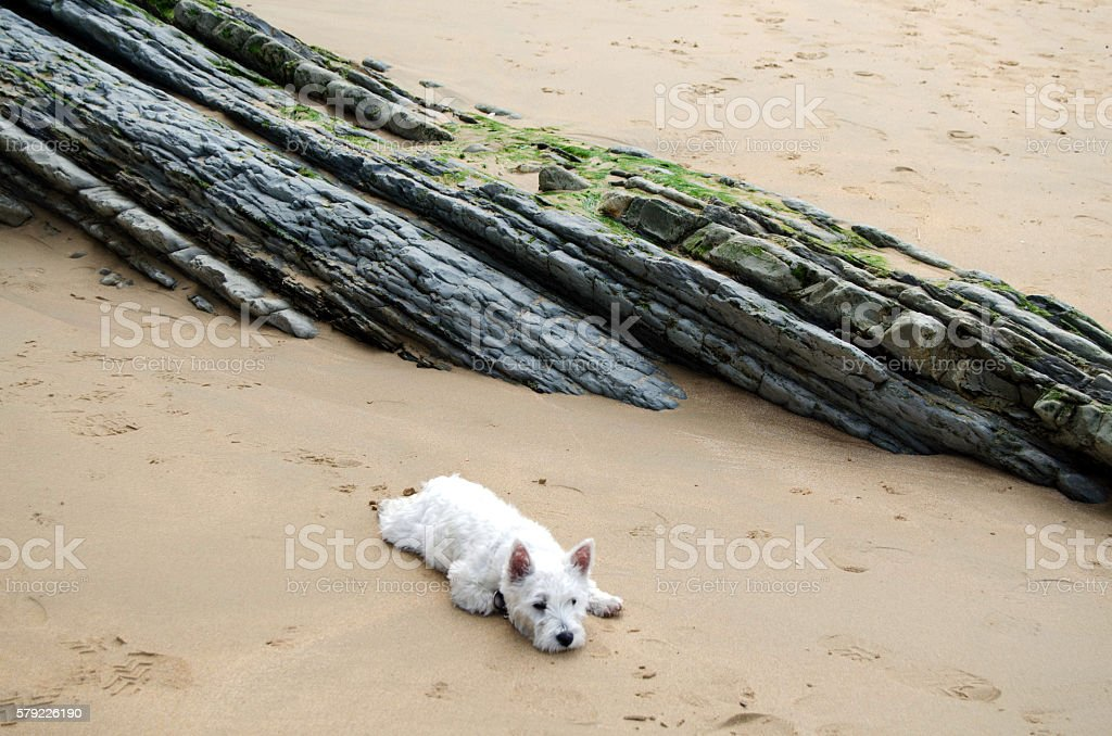 Exhausted puppy stock photo