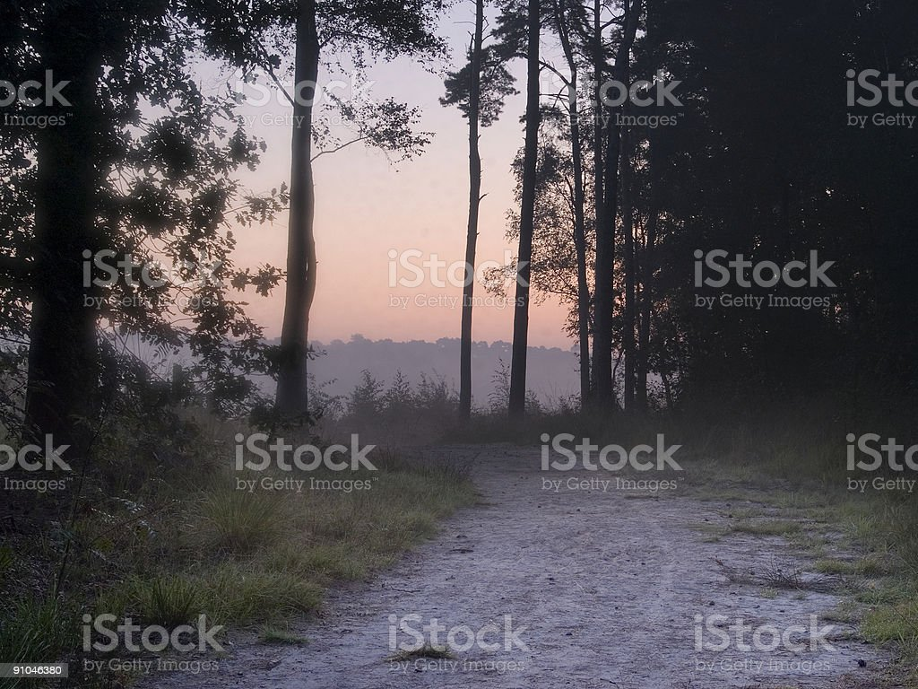 Exit of the dark forest royalty-free stock photo