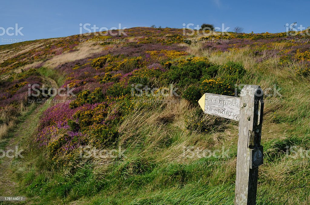Exmoor footpath stock photo