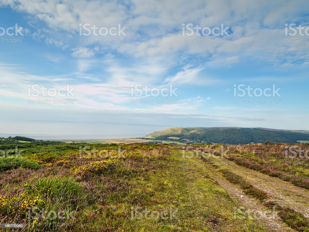 Exmoor landscape with heather, gorse and sea view. UK. stock photo