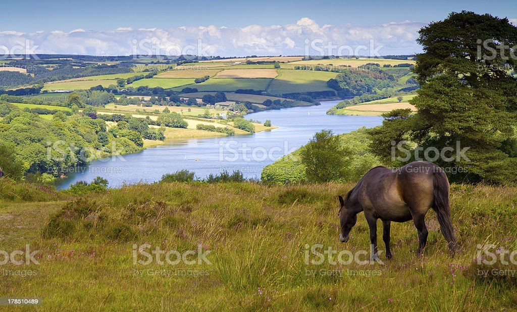 Exmoor pony and Wimbleball Lake Somerset stock photo