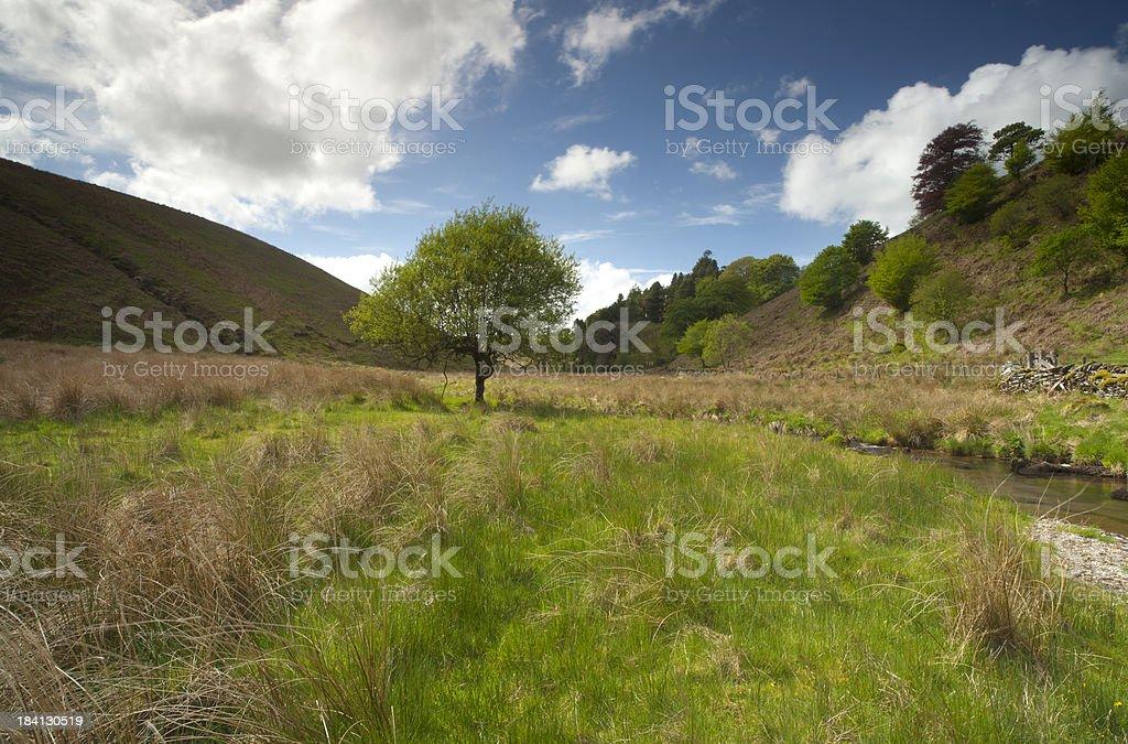Exmoor summer view stock photo
