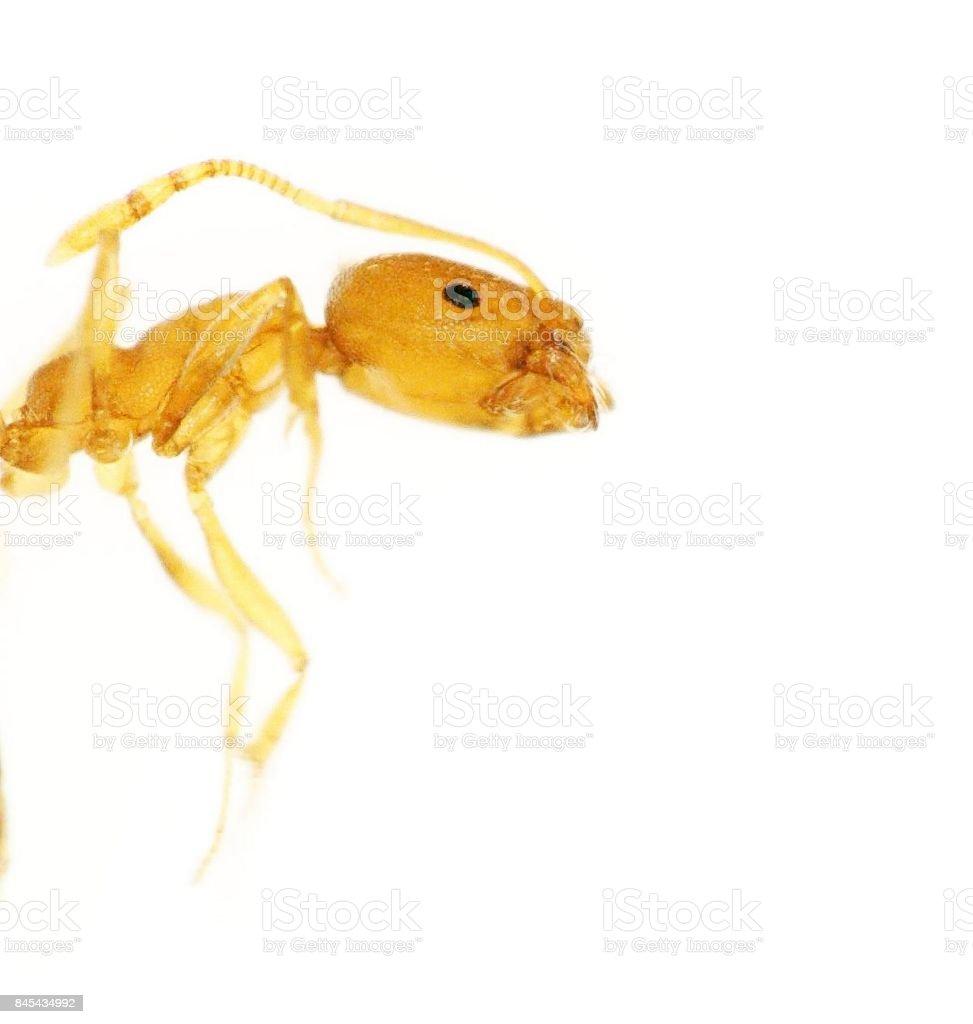 Exoskeleton of an ant stock photo