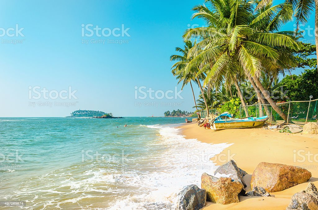 Exotic beach full of palm trees and blue sky stock photo