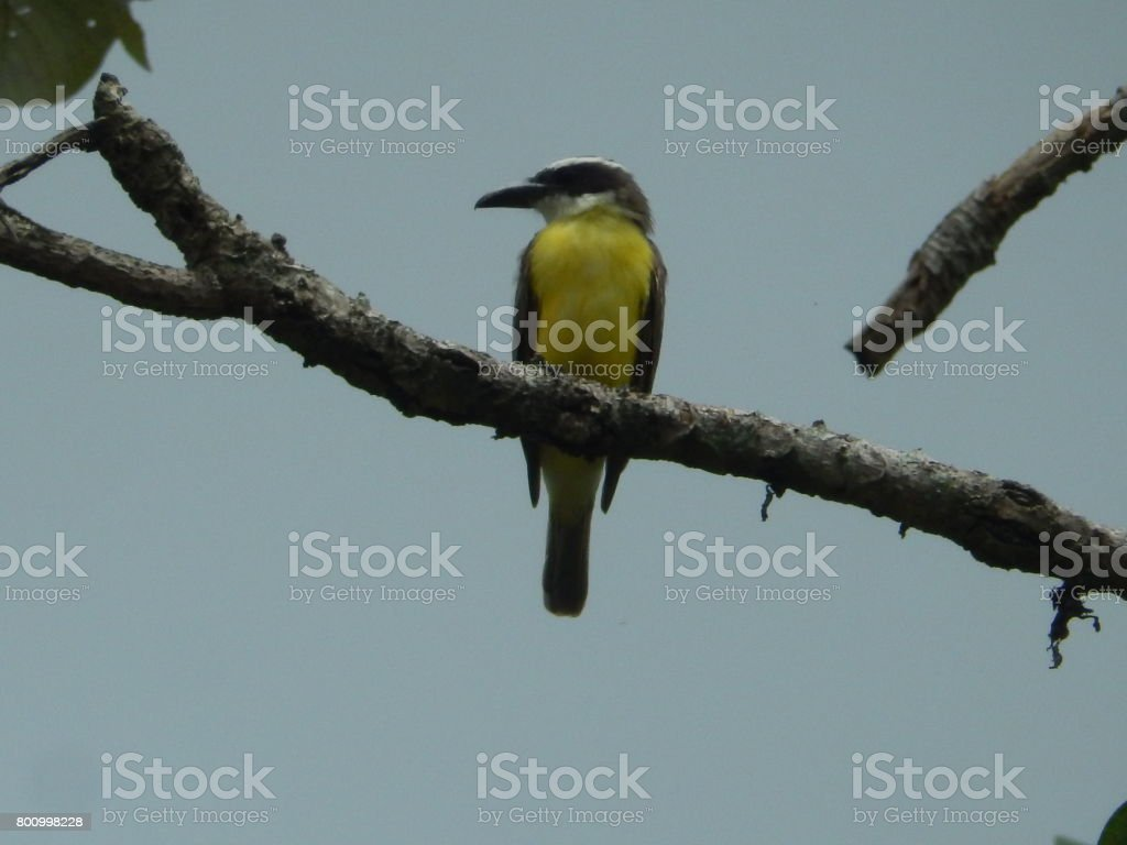 Beautiful bird, in complete freedom flying through the rough forest