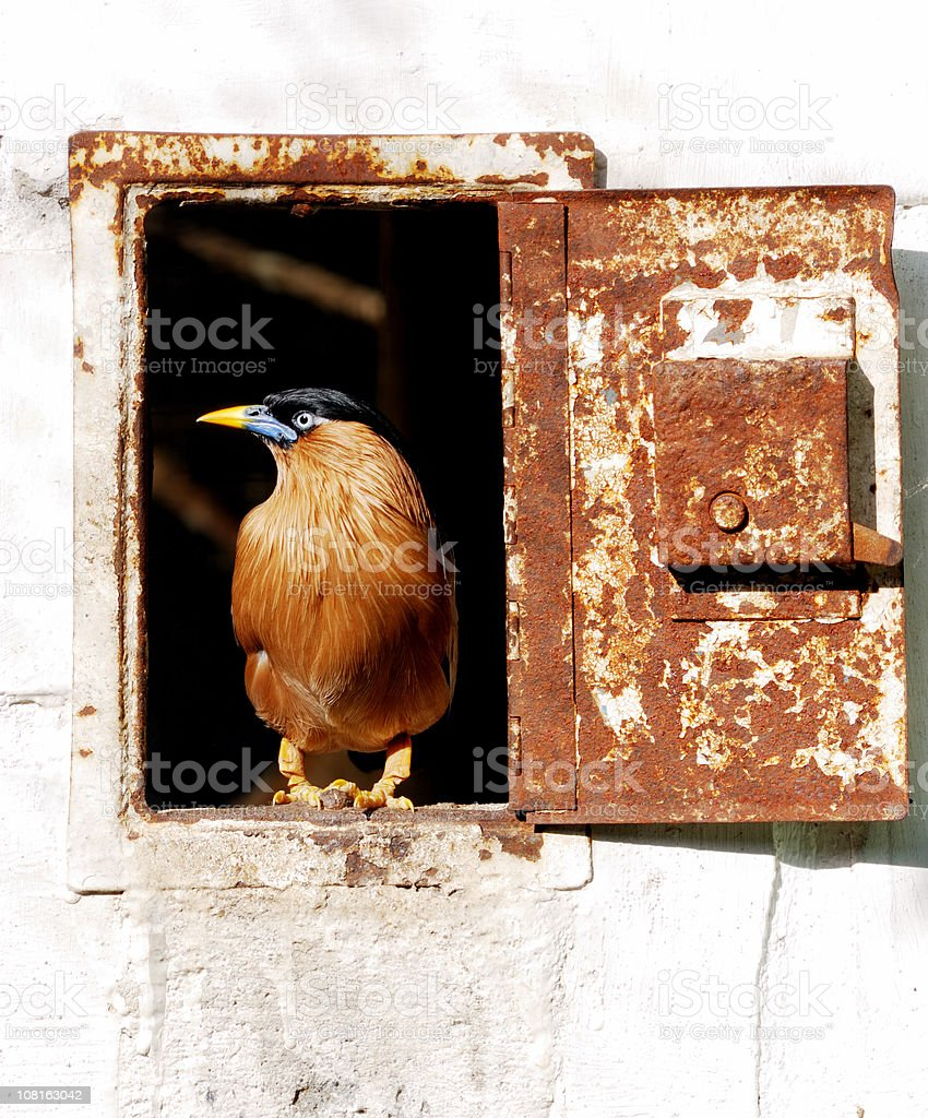 Exotic Bird Sitting in Rusty Door royalty-free stock photo