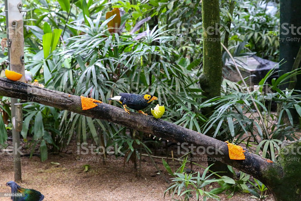 Exotic bird sitting on a tree in forest stock photo