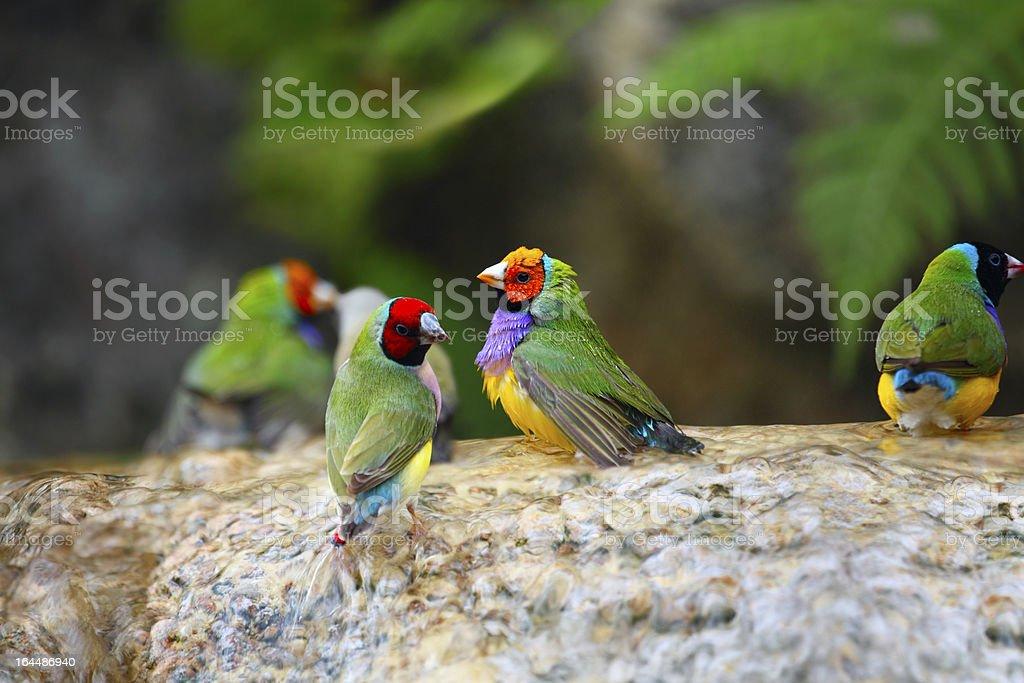 Exotic Birds Enjoying the Water royalty-free stock photo
