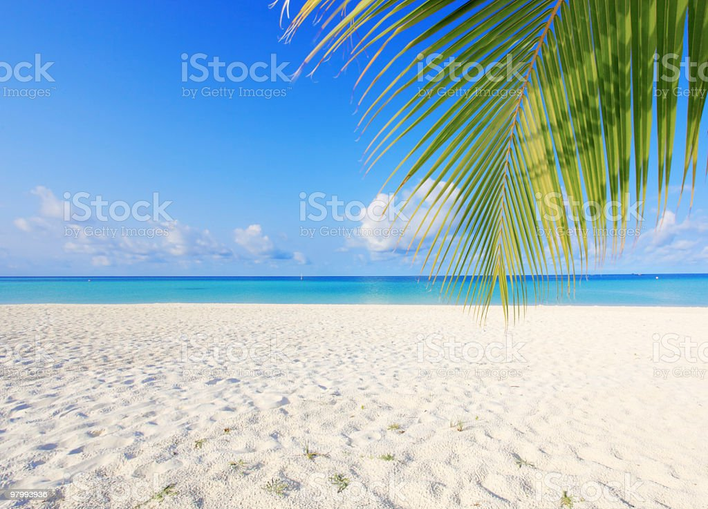 Exotic branch of palm on a Maldivian beach. stock photo