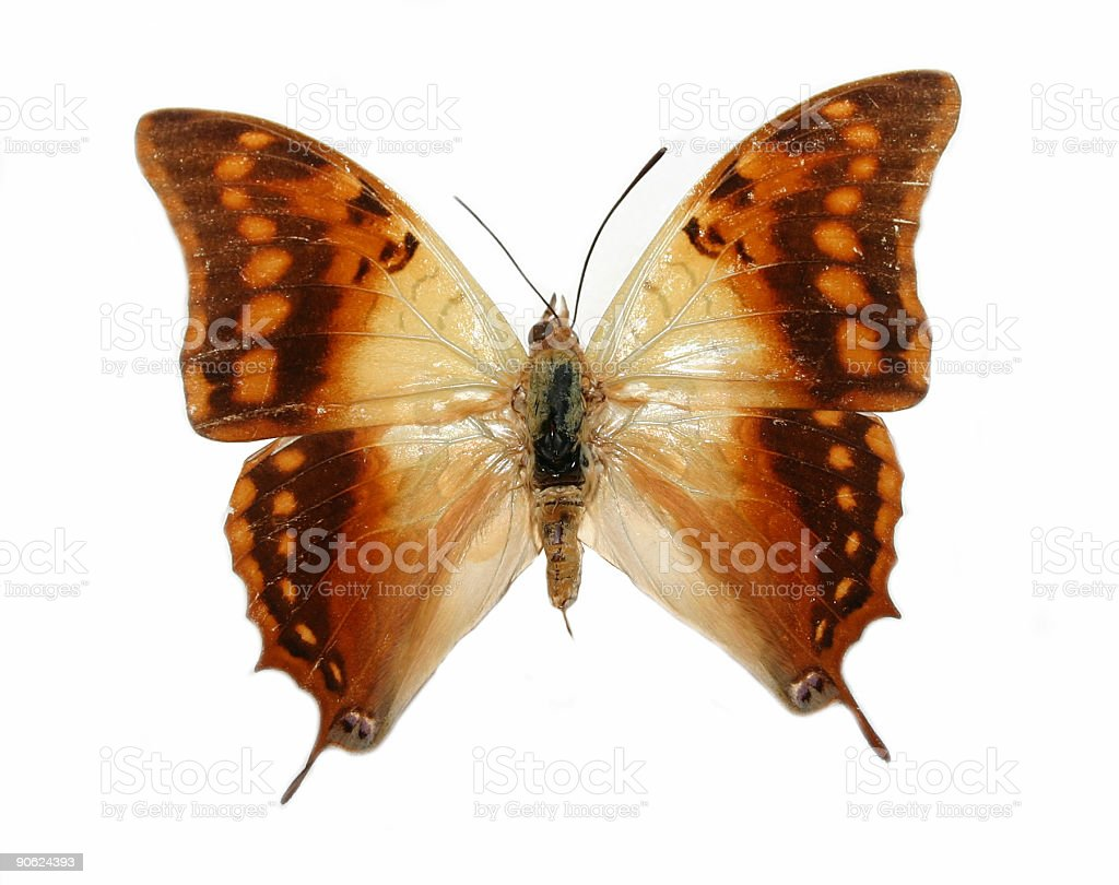 Exotic butterfly royalty-free stock photo