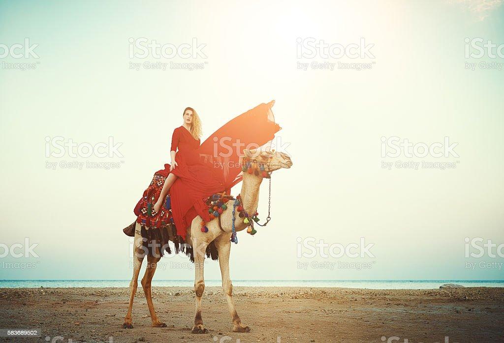 exotic camel ride stock photo