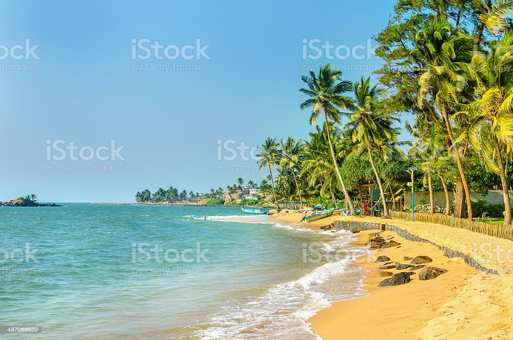 Exotic Caribbean beach full of palm trees stock photo