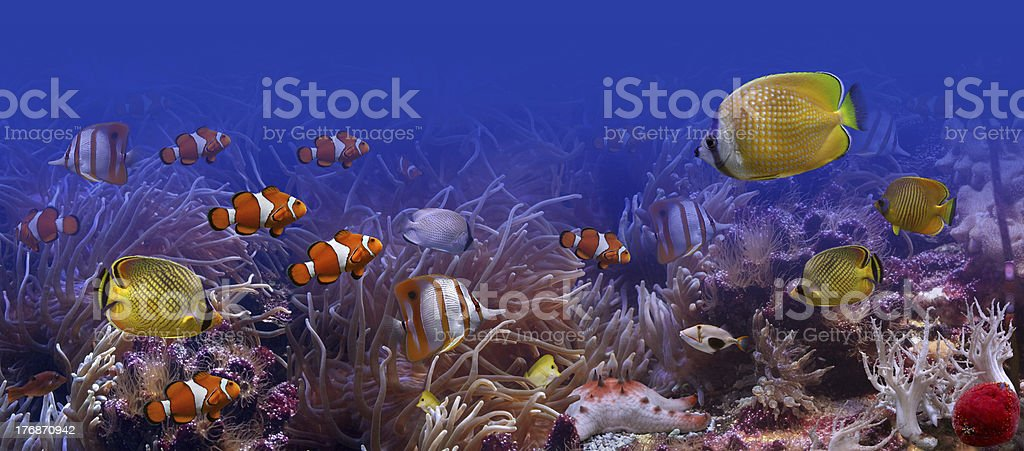 Exotic fish stock photo
